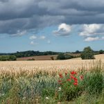 Towards Litcham